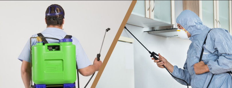 Important Guidelines For Pest Control By Pest Control Sydney Services Experts